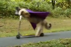 Hund, Super, Sparkcykel, Cykel, Video, Djur, Tricks