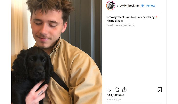 Brooklyn Beckhams hund