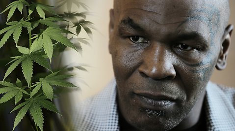 Podcast, Marijuana, Mike tyson, Cannabis, Gräs
